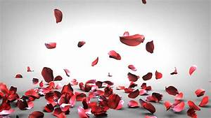 Falling Rose Petals - YouTube