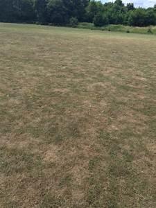 Rasen Nach Düngen Gelb : sieht ihr rasen auch so aus wie der auf unserem bild ~ Markanthonyermac.com Haus und Dekorationen