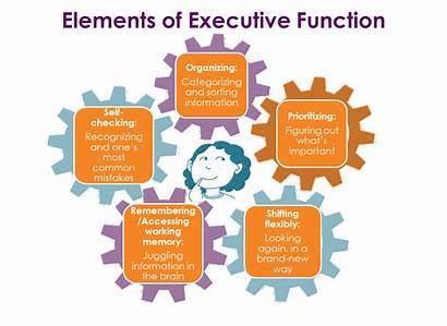 Executive Function Smarts Definition Define Definitions Many