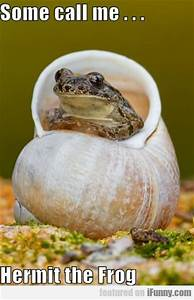 Some Call Me Hermit The Frog | iFunny.com