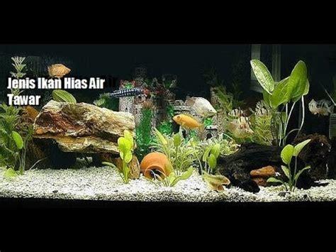 full macam macam jenis ikan hias aquarium mp