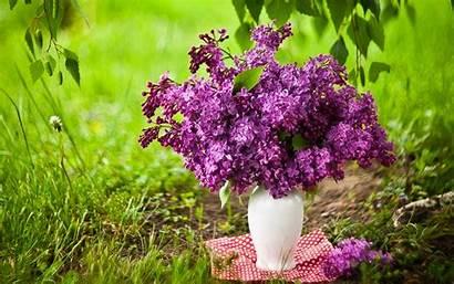 Lilac Desktop Flowers Lilacs Bouquet Spring Wallpapers
