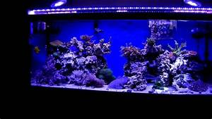 Best Aquarium Lights 75 Gallon Reef Tank Ecoxotic Led 39 S Par38led Youtube