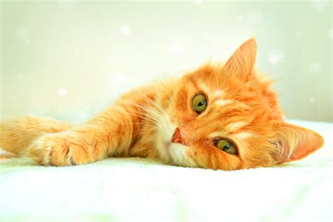 Aspirin Poisoning In Cats Petmd
