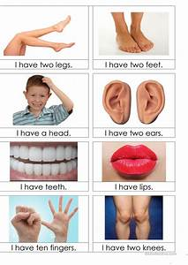 Body Parts Flashcards Worksheet