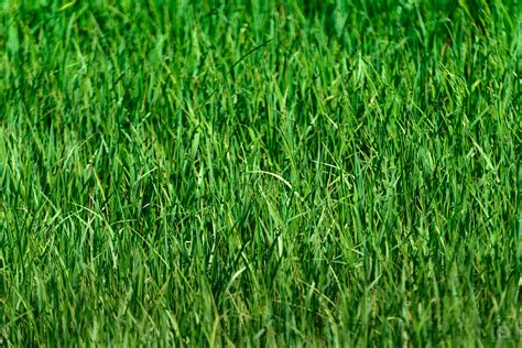 grass background texture high quality  backgrounds