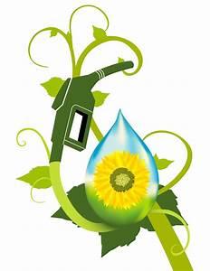 Forms of Energy – Biofuels   Historymartinez's Blog