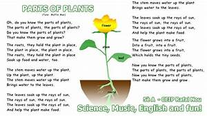Parts Of Plants Song