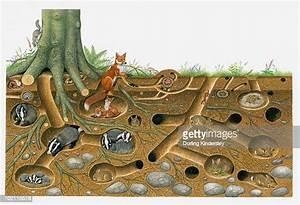 Animal Den High Res Illustrations