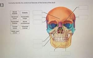 Protuberance Anatomy