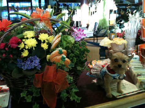 Winner Of Snohomish Countys Cutest Pet Costume Contest