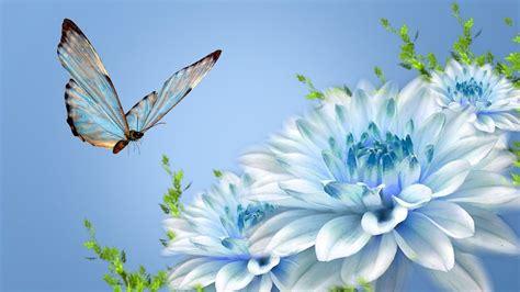 chrysanthemum flower wallpaper
