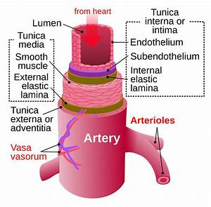 Anatomical Arterial Diagram
