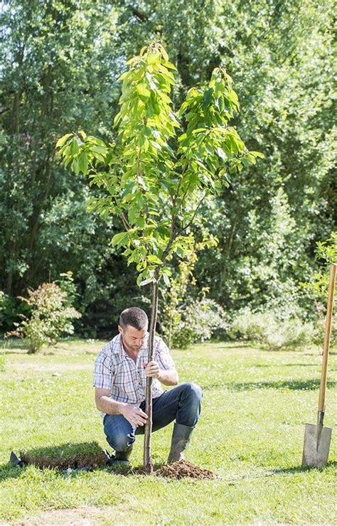 planter un arbre en pot comment bien planter un arbre