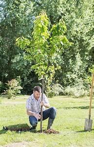 Quand Planter Lavande Dans Jardin : quand faut il planter les arbres fruitiers ~ Dode.kayakingforconservation.com Idées de Décoration