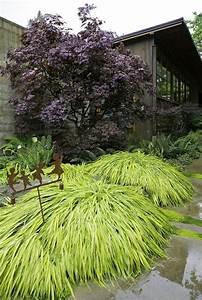 Gräser Im Garten : japanischer ahorn im garten arten die direkte sonne ~ Michelbontemps.com Haus und Dekorationen