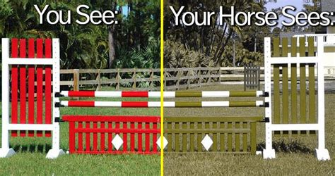 what colors do horses see vision and its effects on horsemanship
