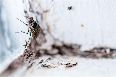 faire fuir les mouches le rem 232 de naturel de la semaine les huiles essentielles