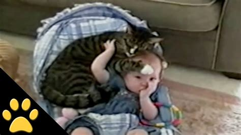 cat protects baby youtube