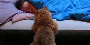 cat alarm clock cat alarm clocks the only way to get up in the morning