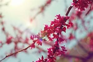 Cute Cherry Quotes. QuotesGram