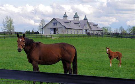 kentucky bluegrass horse things farm bourbon beaumont inn