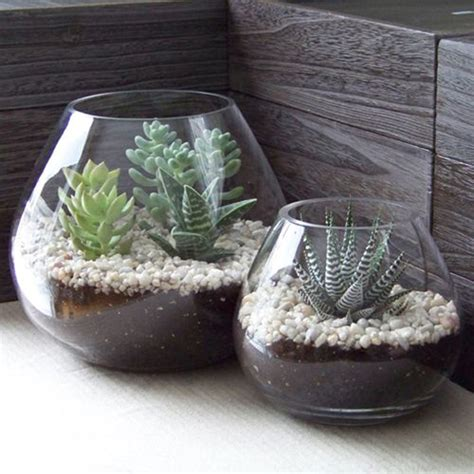 mini indoor succulents design