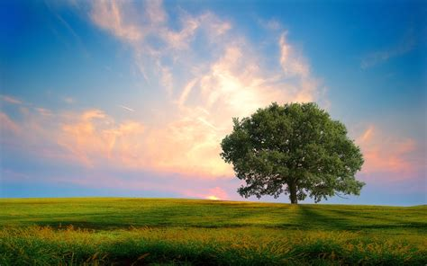 The Real Face Of Pakistan Green Wallpapers Natural