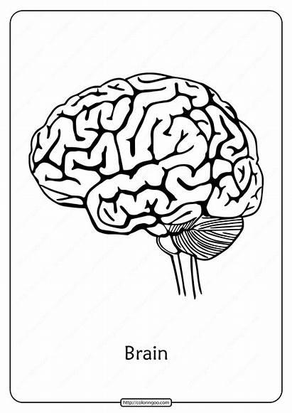 Printable Coloring Outline Pdf Biology Brain Whatsapp