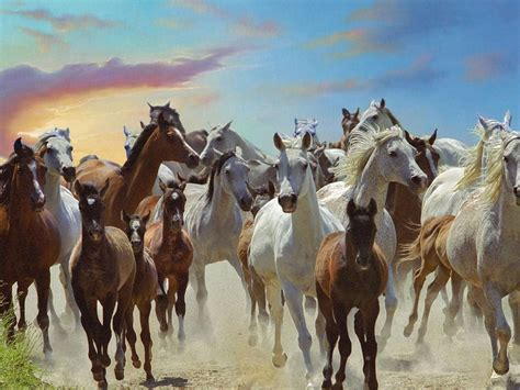 galloping horses  wallpapers hd