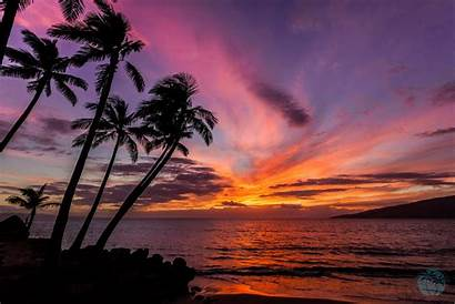 Palm Sunset Trees Wallpapers Background Desktop Hawaii