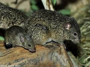 Ratte Im Haus : wanderratte im garten wanderratte im garten ratten im haus und garten kannen zur ratten ~ Buech-reservation.com Haus und Dekorationen