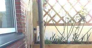 Balkonkästen Winterhart Bepflanzen : tessimo 39 s balkongeschichten bodendecker f r k bel ~ Lizthompson.info Haus und Dekorationen