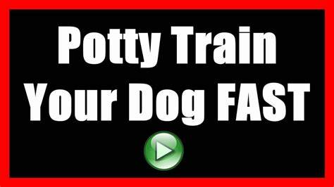 Going To Train You Hates A Dog