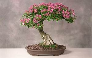 Weidenruten Zum Pflanzen Kaufen : bonsai baum diese ausgefallene pflanze n her kennenlernen ~ Lizthompson.info Haus und Dekorationen