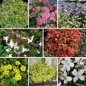 Quels Arbustes Pour Une Haie : kit haie basse fleurie hauteur 1m lot de 8 arbustes ~ Premium-room.com Idées de Décoration