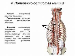 Болят мышцы крутит суставы