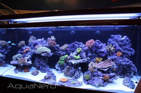 sea reef aquarium the sea max s 650 is one big beefy aio aquarium aquanerd