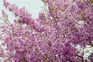 Rosa Blühende Bäume April : bl hende b ume stockfotos kaufen colourbox ~ Michelbontemps.com Haus und Dekorationen