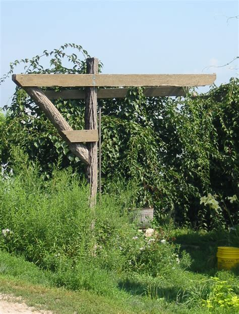grape trellis construction welcome new post has been published on kalkunta com