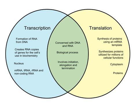 Transcription And Translation Venn Diagram by Difference Between Transcription And Translation