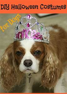 5 diy costumes for dogs