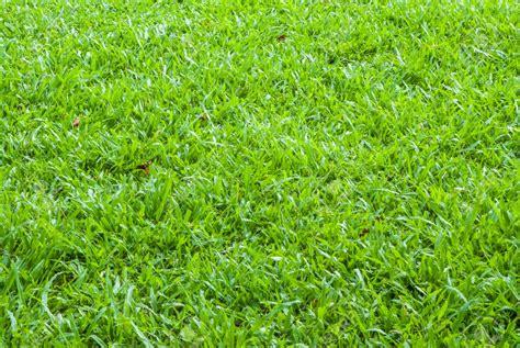 carpet grass barmac pty ltd