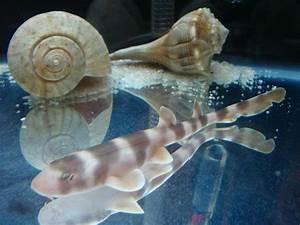 Baby Bamboo Shark   www.pixshark.com - Images Galleries ...