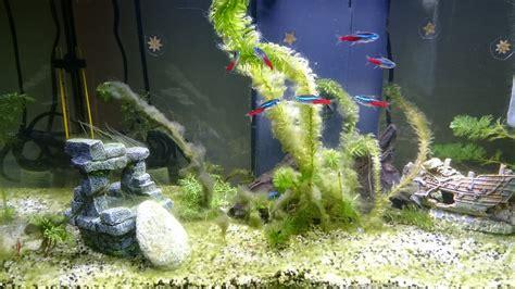 probleme d algue aquarium probl 232 me d algues dans l aquarium