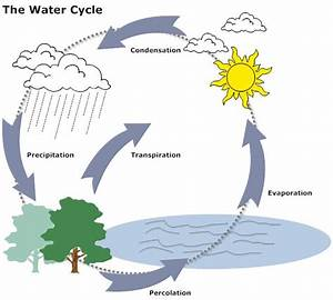 Example Image  Water Cycle Diagram