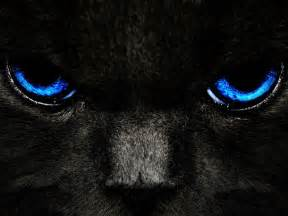black cats with blue wallpapers black cat blue
