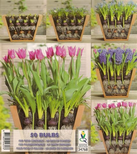 bulb planting ideas 17 best images about gardening bulbs on pinterest gardens spring bulbs and sun