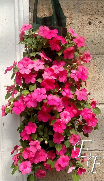 Flower Pouches Gh Pouch Flowers Al Fence