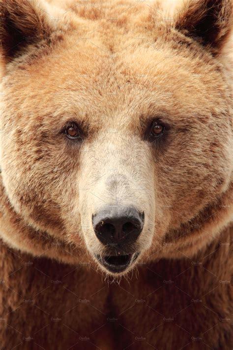 bear animal  creative market